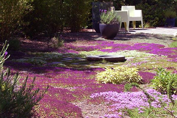 Какие бывают газоны, виды и особенности | Ландшафтный дизайн - Галерея-услуг