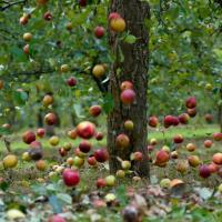 Календарь садовода, работы в саду, советы | Сад, огород - Галерея-услуг