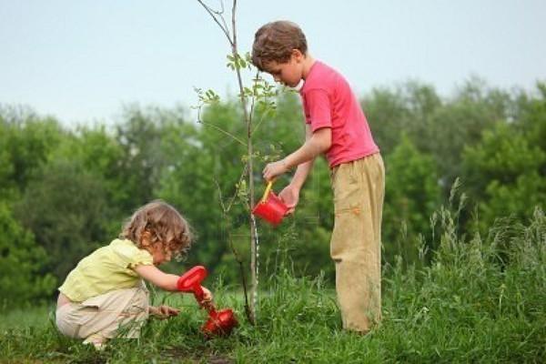 Календарь садовода, работы в саду, советы   Сад, огород - Галерея-услуг